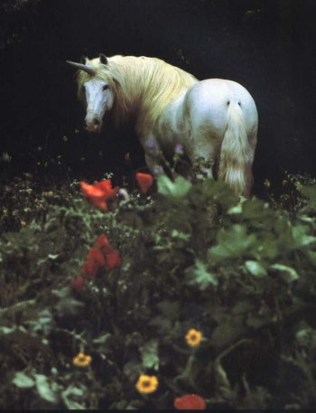 White Unicorn in Meadow of Flowers